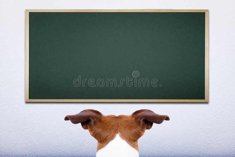 Cane alla scuola fotografie stock