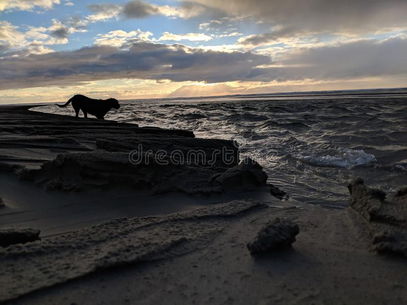 Cane alla spiaggia immagini stock libere da diritti