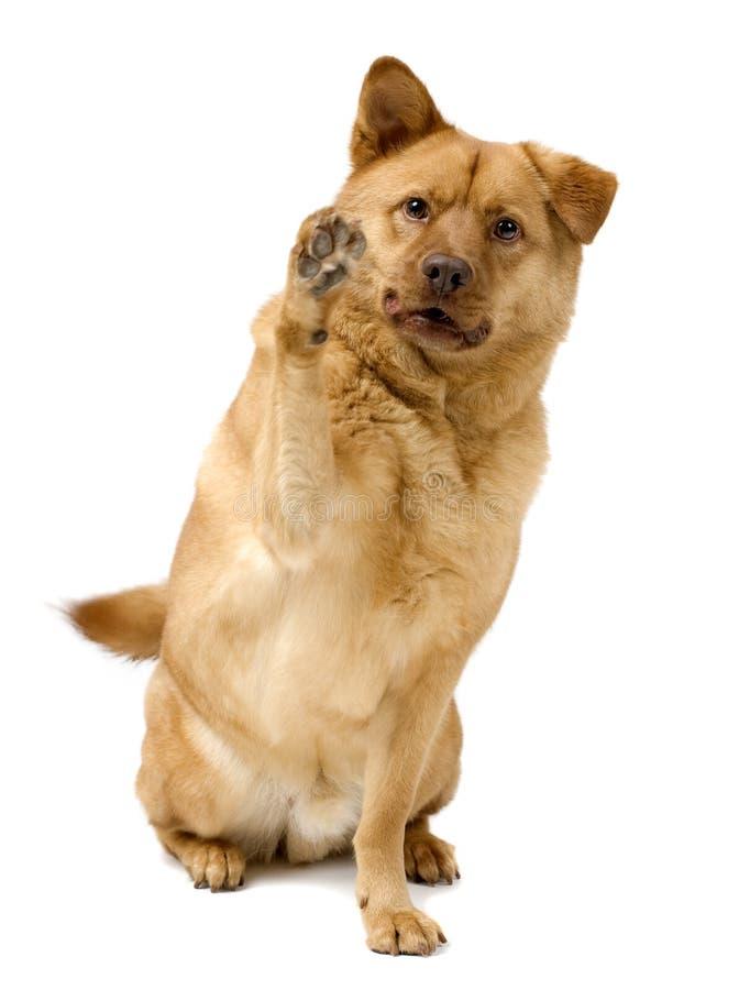 Cane alti cinque immagini stock libere da diritti