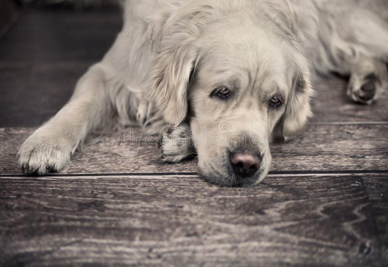 Cane amichevole che aspetta il suo padrone fotografia stock