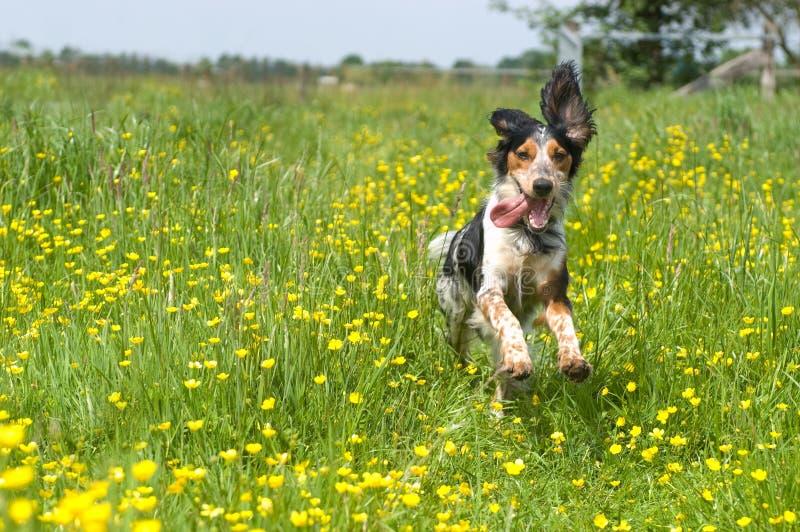 Cane attivo felice immagini stock