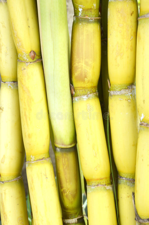 Download Cane Background Stock Photo - Image: 38215210