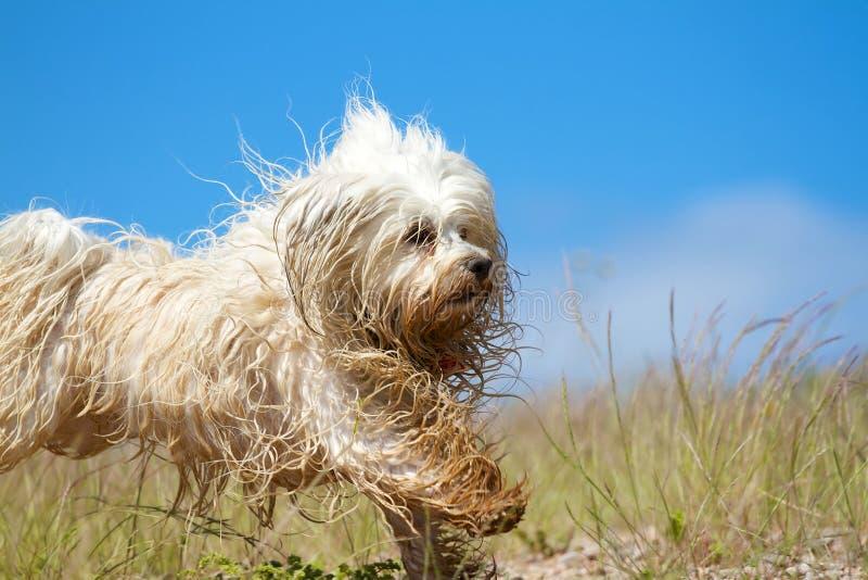 Cane bagnato più allegro fotografia stock libera da diritti