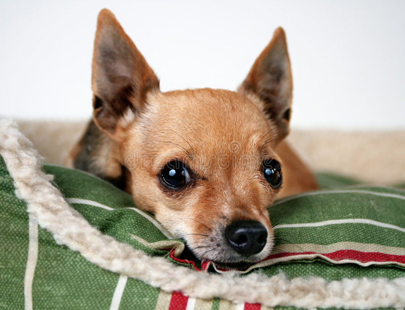 Cane in base immagini stock libere da diritti
