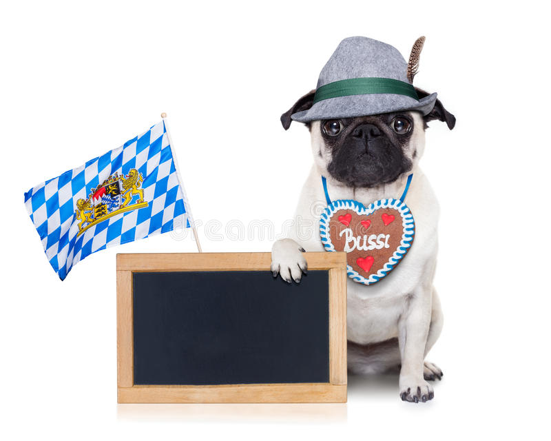 Cane bavarese fotografia stock libera da diritti