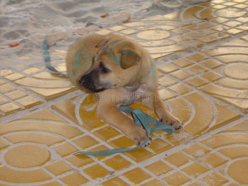 Cane blu della spiaggia fotografia stock libera da diritti