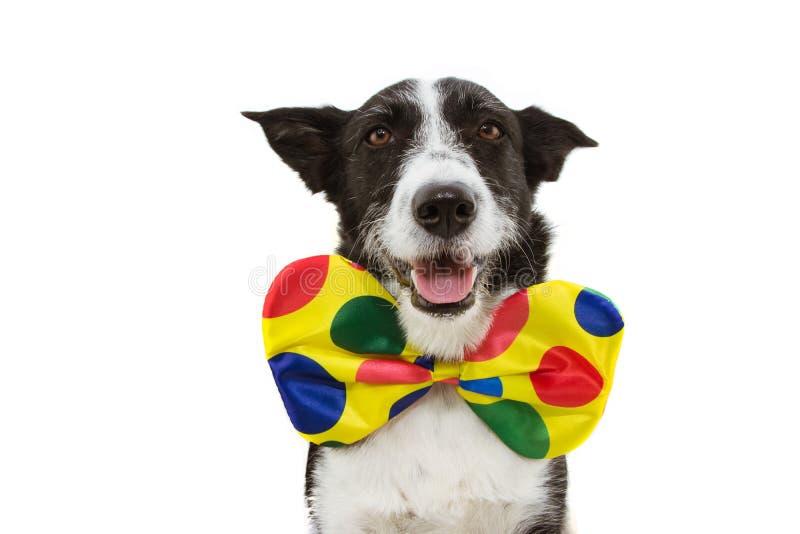 Cane buffone vestito da clown per il carnevale, festa di Halloween Isolato su fondo bianco immagini stock