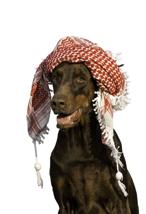 Cane in cappello. immagine stock