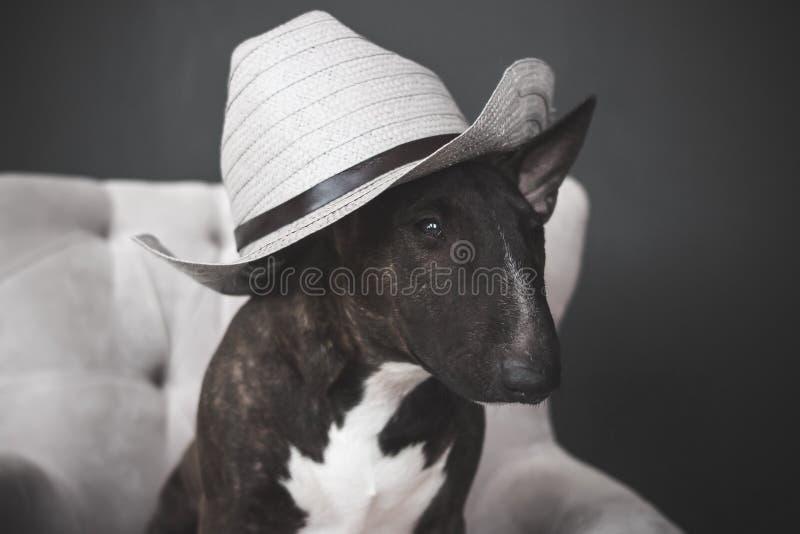 Cane, cappello fotografia stock