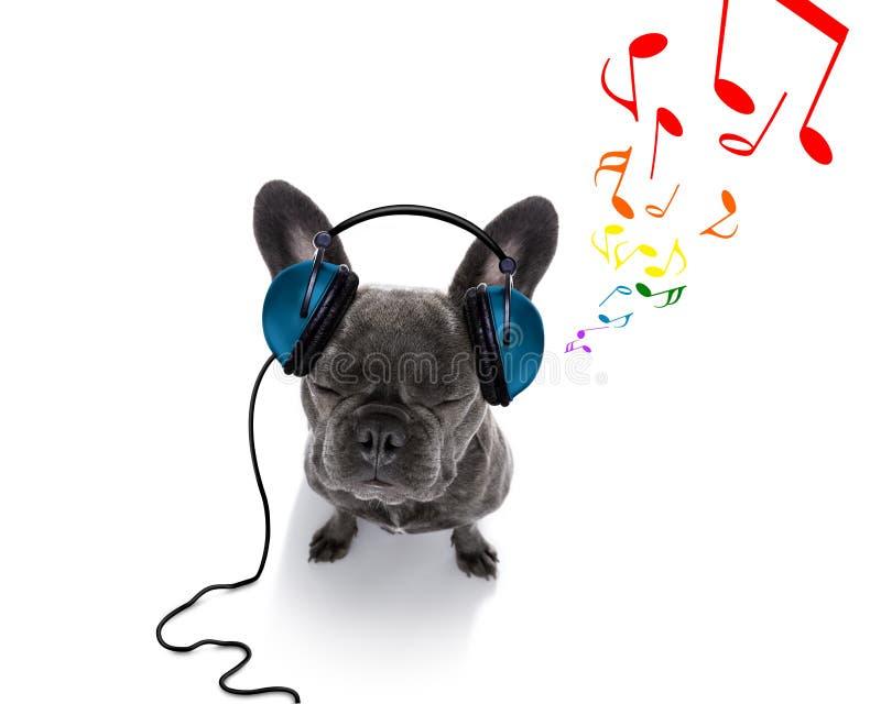 Cane che ascolta la musica immagine stock libera da diritti