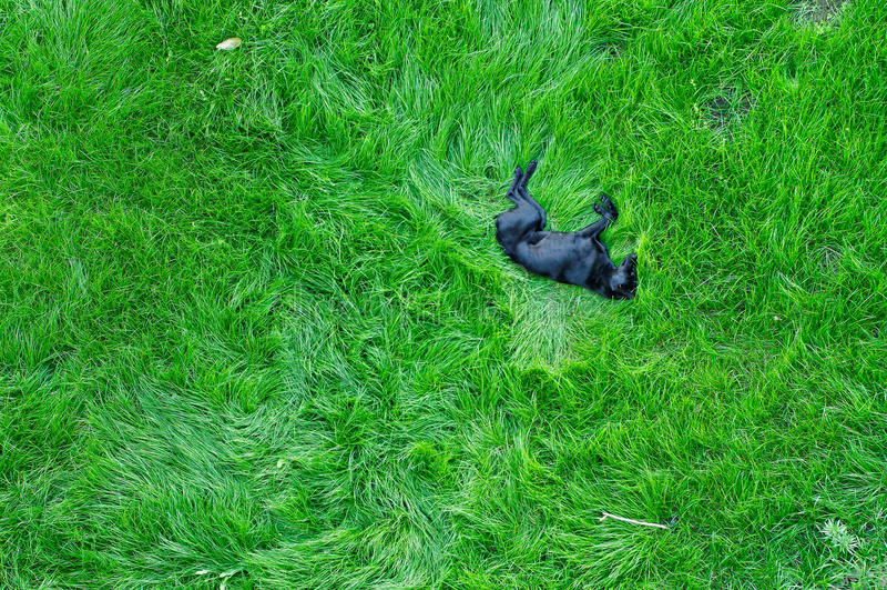 Cane che dorme sull'erba verde fotografie stock