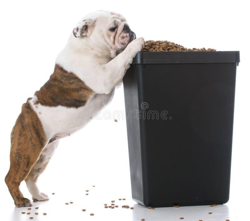 Cane che elemosina l'alimento fotografia stock libera da diritti