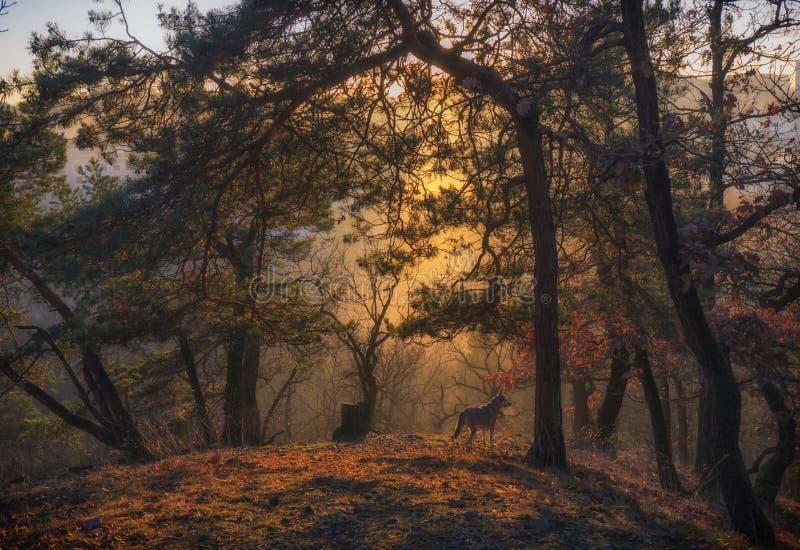 Cane che esamina la foresta immagini stock