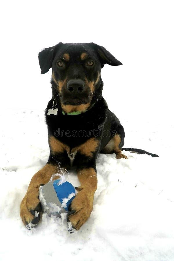Cane che gioca fuori nella neve fotografie stock libere da diritti