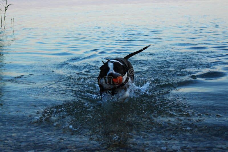 Cane che gode del bagno immagine stock libera da diritti