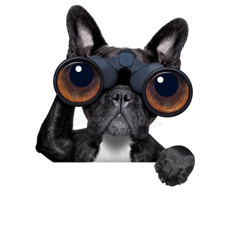 Cane che guarda tramite il binocolo fotografia stock libera da diritti