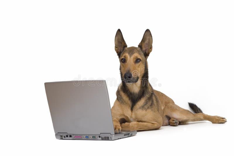 Cane che lavora al computer portatile fotografia stock libera da diritti