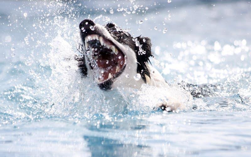 Cane che morde all'acqua fotografia stock