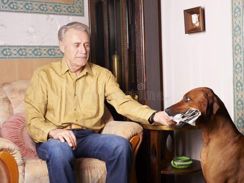 Cane che porta giornale fotografie stock libere da diritti