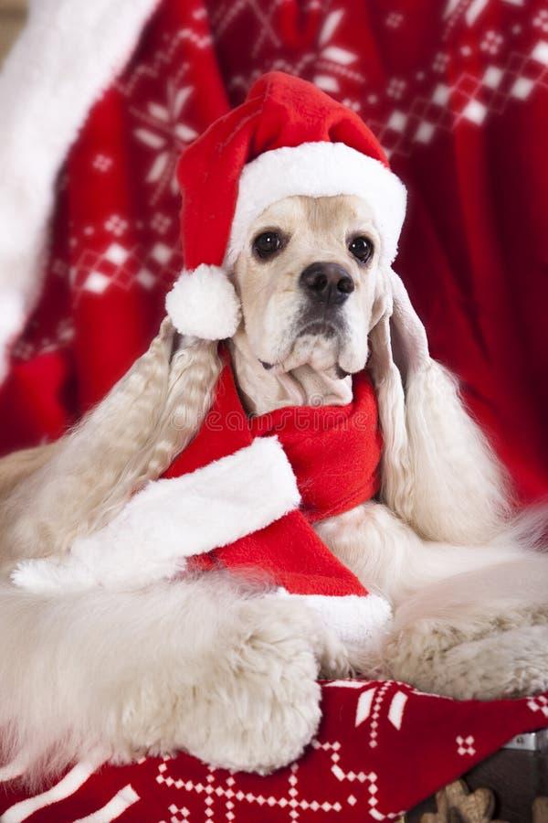 Cane che porta un cappello di Santa fotografia stock libera da diritti