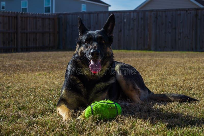 Cane che risiede nell'erba fotografia stock