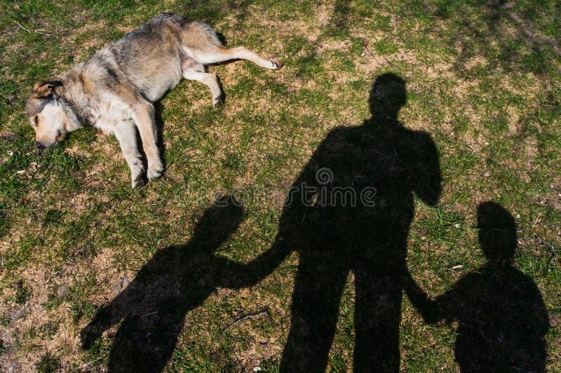 Cane che risiede nell'erba immagini stock