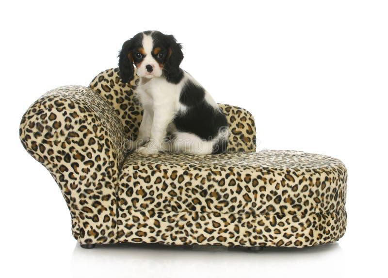 Cane che si siede su una base del cane immagine stock