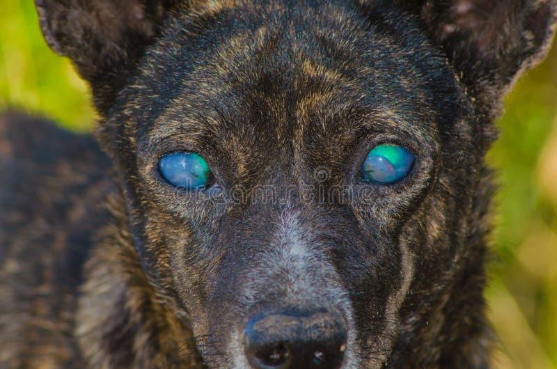 Cane cieco fotografia stock