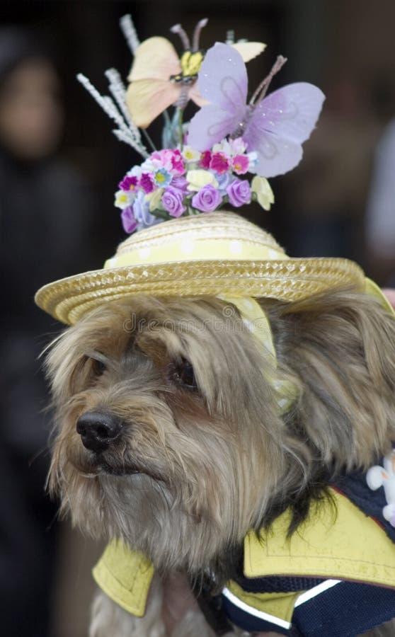 Cane con il cappello fotografie stock libere da diritti