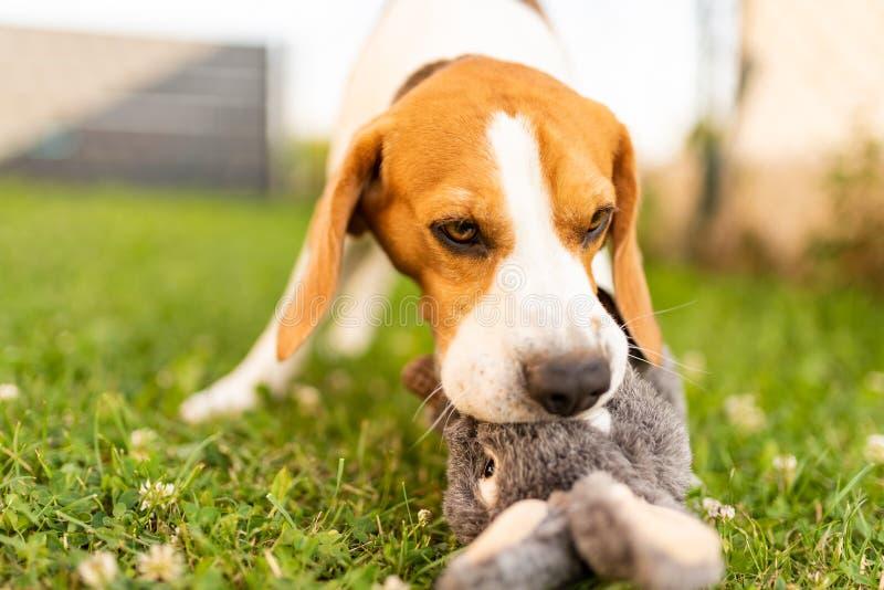 Cane con il coniglio di coniglietto del giocattolo della peluche di estate in giardino fotografie stock libere da diritti