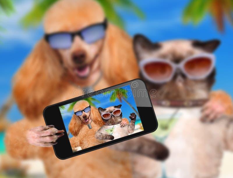 Cane con il gatto che prende un selfie insieme ad uno smartphone fotografie stock libere da diritti