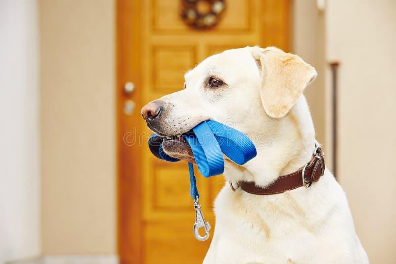 Cane con il guinzaglio immagini stock libere da diritti