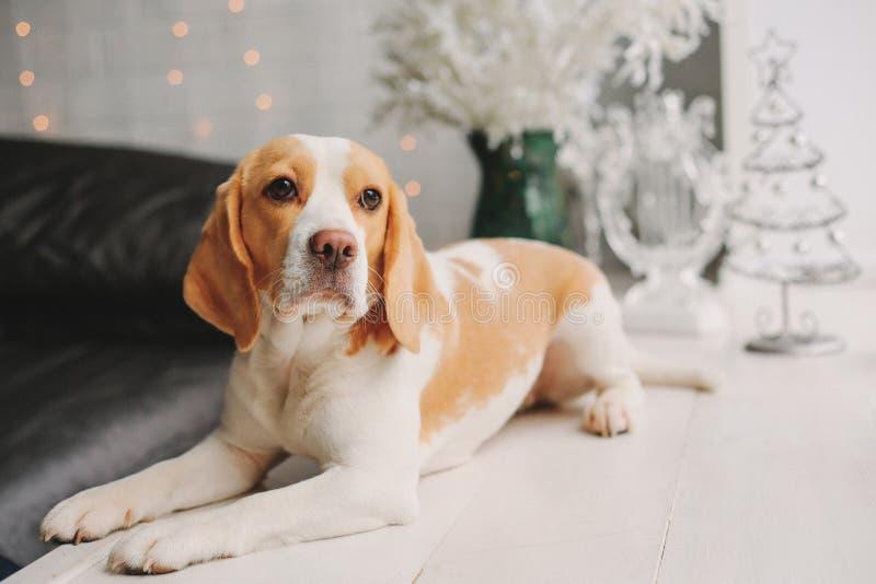 Cane con le decorazioni del nuovo anno immagini stock