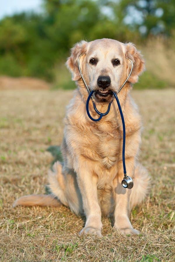 Cane con lo stetoscopio sul giardino immagini stock