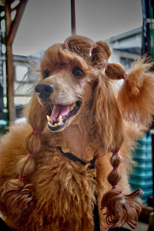 Cane con stile fotografia stock libera da diritti