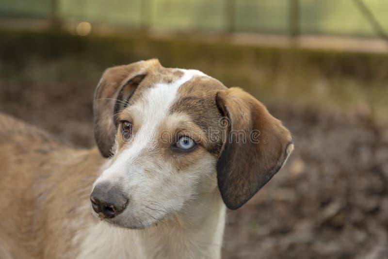 Cane con un'espressione sveglia del fronte immagine stock