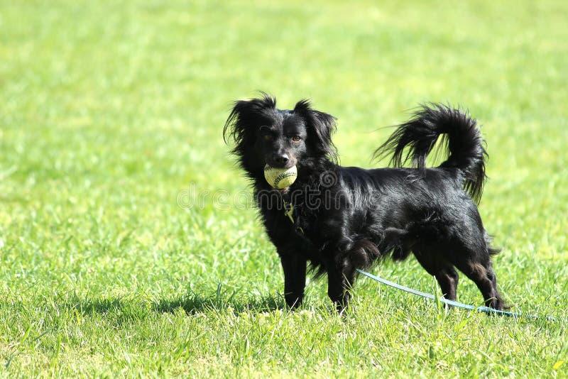 Cane con una palla fotografia stock