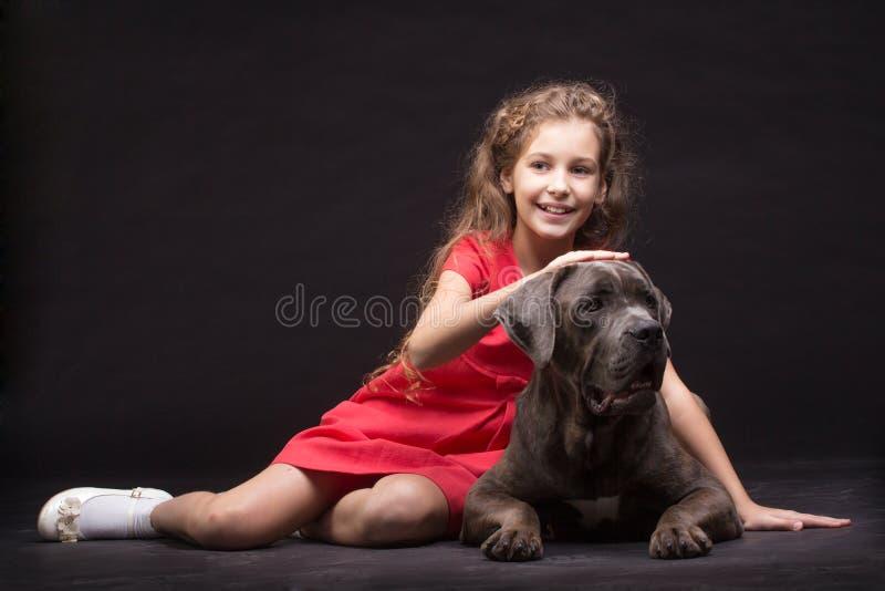 Cane corso dog. Cane corso, dog on the black background royalty free stock image