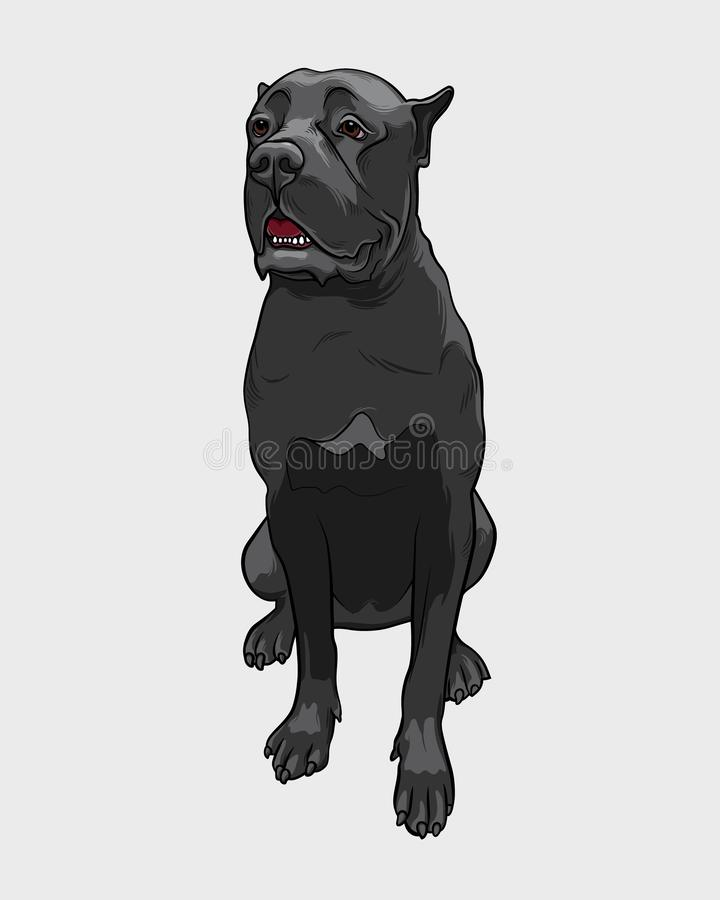 Cane Corso dog - isolated vector illustration vector illustration