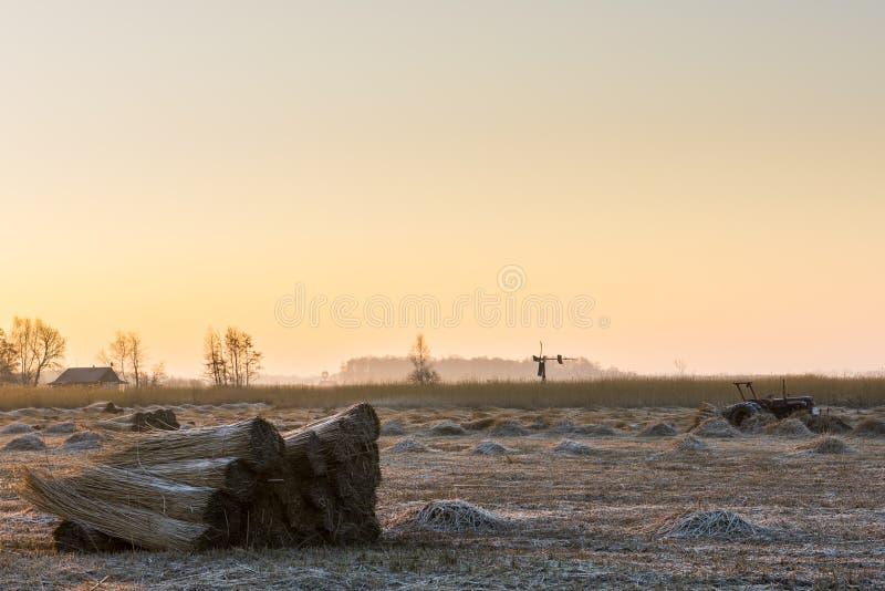 Cane Cultivation Mill Trator Giethoorn fotografia de stock royalty free