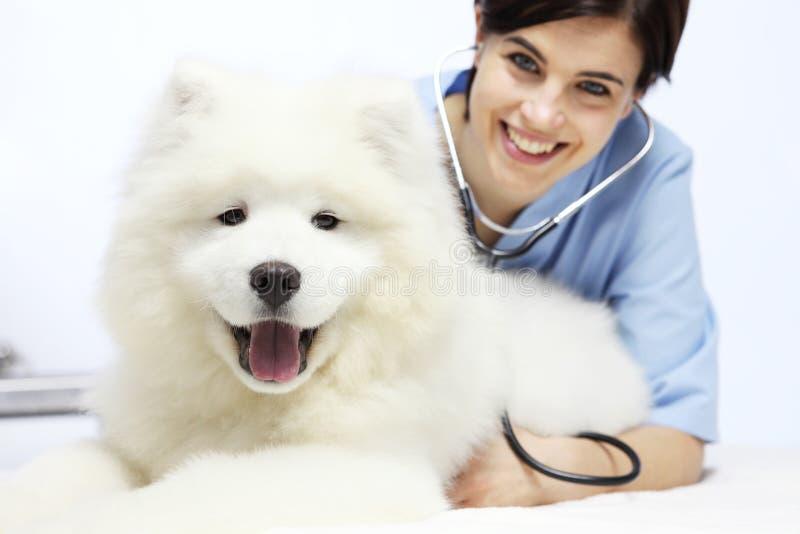 Cane d'esame sorridente del veterinario sulla tavola nella clinica del veterinario immagine stock