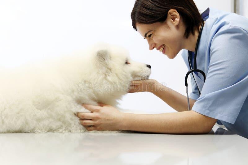 Cane d'esame sorridente del veterinario sulla tavola nella clinica del veterinario fotografia stock libera da diritti