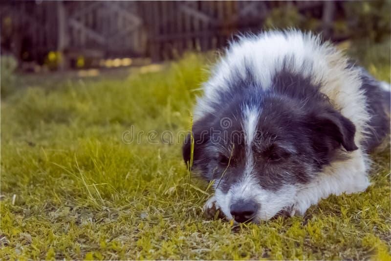 Cane da caccia funzionante fotografie stock
