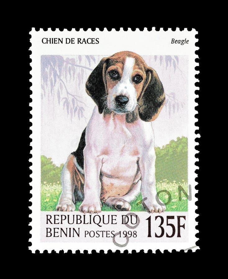 Cane da lepre sul francobollo fotografie stock