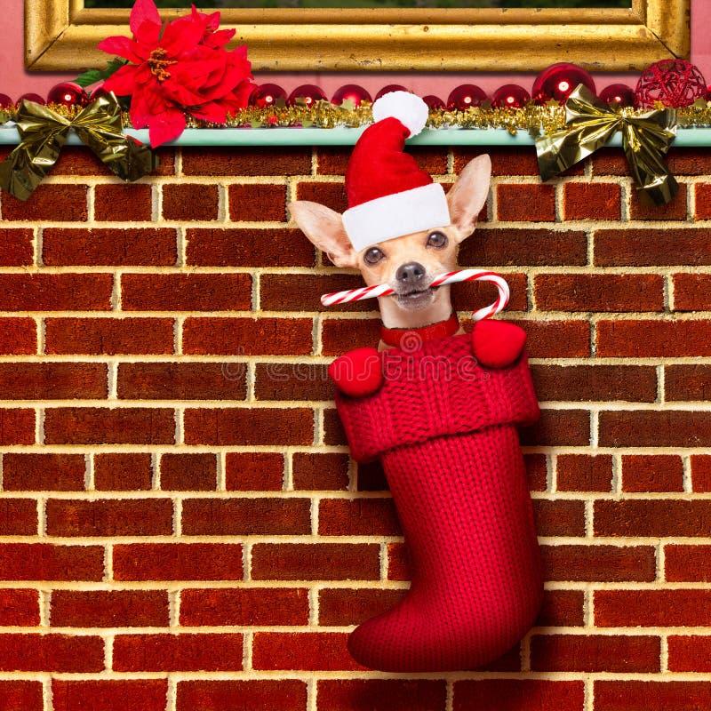 Cane del Babbo Natale di Natale in calze per natale immagine stock libera da diritti
