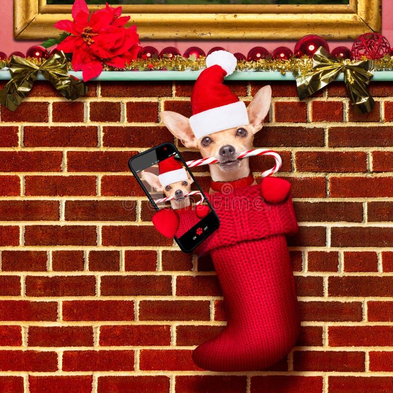 Cane del Babbo Natale di Natale in calze per natale immagine stock