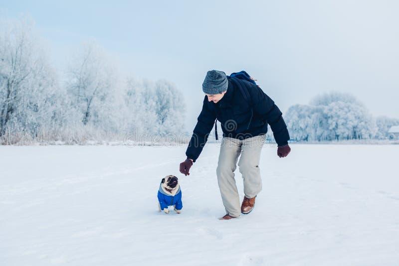 Cane del carlino che cammina sulla neve con il suo padrone Cappotto d'uso di inverno del cucciolo fotografie stock libere da diritti
