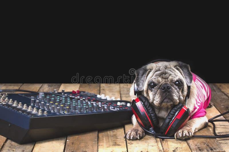 Cane del carlino con apparecchio di registrazione fotografia stock