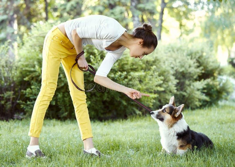 Cane del Corgi di Lingua gallese che è punito per il cattivo comportamento dal proprietario con il dito che indica lui fotografie stock libere da diritti