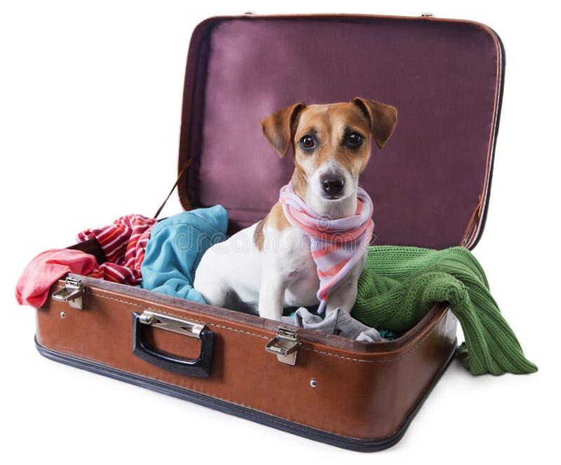 Cane del globetrotter fotografie stock libere da diritti